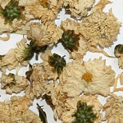 Organic Chrysanthemum Flowers